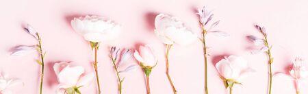 Romantic banner, delicate white roses flowers close-up. Fragrant crem pink petals