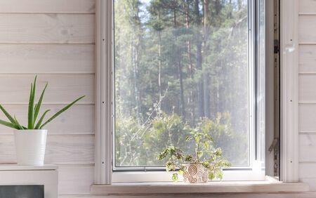 Weißes Fenster mit Moskitonetz in einem rustikalen Holzhaus mit Blick auf den Garten, Pinienwald. Zimmerpflanzen in Weiß rein und sauber skandinavisches Schlafzimmer auf der Fensterbank Standard-Bild