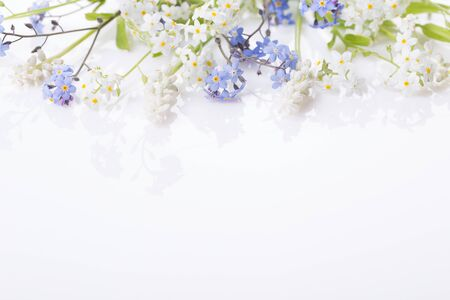 Blue and white forget-me-nots. Little spring summer flowers on a white background. Banco de Imagens