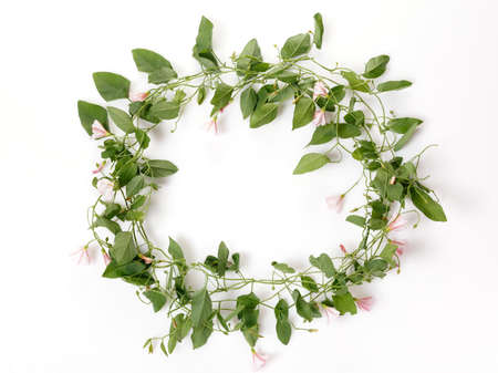 Wreath of wildflowers bindweed or convolvulus isolated on a white background.
