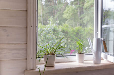 White window with mosquito net in a rustic wooden house overlooking the garden. Houseplants and a watering can on the windowsill. Zdjęcie Seryjne