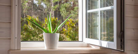 White window in a rustic wooden house overlooking the garden, pine forest. Aloe Vera in white pot on windowsill