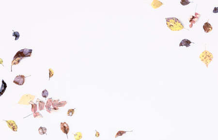 Autumn composition, autumn flowers and leaves on white background. Flat lay, top view, copy space