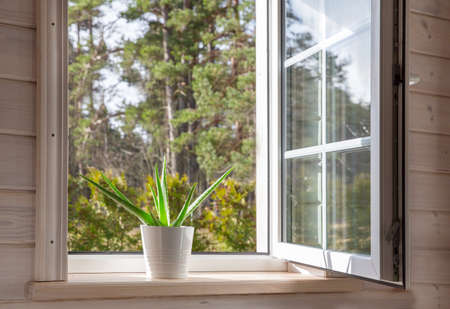 White window in a rustic wooden house overlooking the garden, pine forest. Aloe Vera in white pot on windowsill Zdjęcie Seryjne - 153349806
