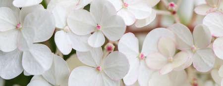 White hydrangea flowers panoramic border, banner, wedding romantic background. Flat lay.