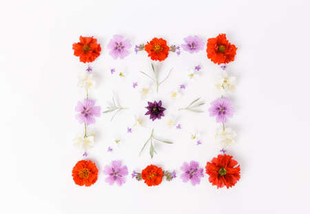 Square ornament made of summer flowers on white background. Flat lay, top view, copy space