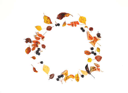 Autumn wreath made of autumn leaves and berry on white background.