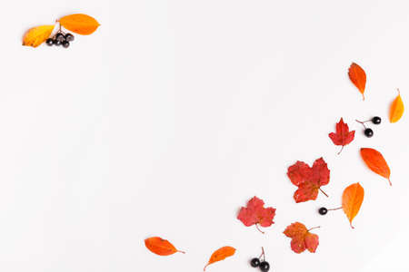 Autumn background made of autumn leaves and berry on white background.