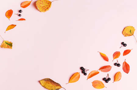 Autumn background made of autumn leaves and berry on pink background.