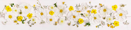 White cosmea cosmos flowers festive wedding romantic background. Flat lay, top view.