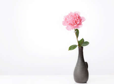 Pink peony in vase isolated on white background