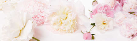 Border frame of pink and white peony isolated on white background. Top view. Frame of flowers. Floral background