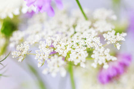 Wild flowers close-up, background, shallow depth of field