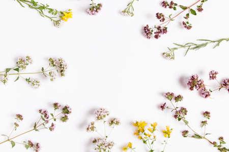 Various herbs and flowers on white background, top view, floral border Zdjęcie Seryjne