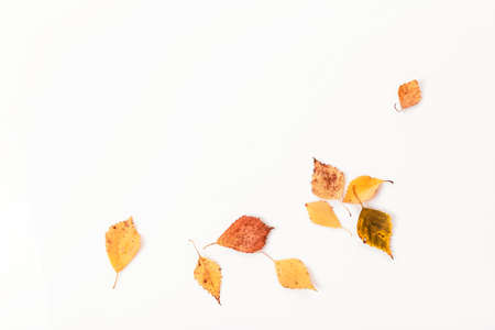 Autumn composition.Frame made of autumn dry multi-colored leaves and flowers on white background. Autumn, fall concept. Flat lay, top view, copy space