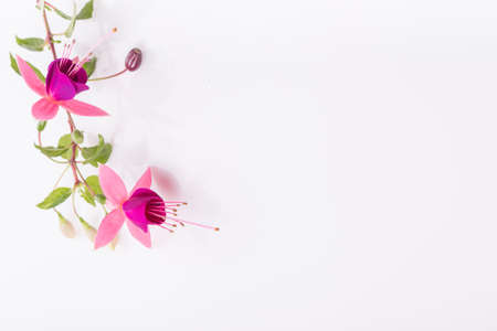 Group of pink fuchsia flowers isolated on white. Overhead top view, flat lay.