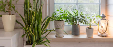 Group of houseplant on white wooden windowsill in a Scandinavian-style room. Home decoration lifestyle