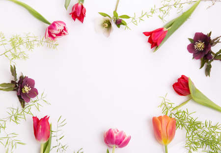 Floral frame of pink and purple tulips and hellebore on white background. Flat lay, top view 写真素材