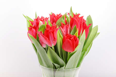 Bouquet of pink red tulip on white background. 8 March concept