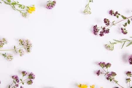 Alternative medicine. Medicinal herbs oregano, St. Johns wort, sage, yarrow on a white background.