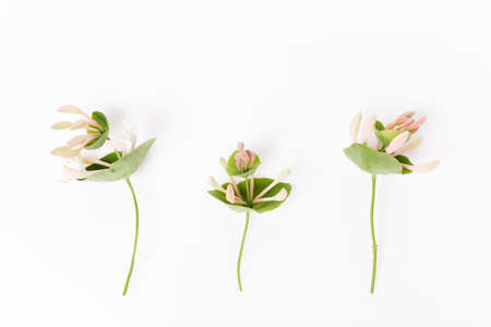 Set of wildflowers on white background. Botany concept, overhead top view, flat lay.
