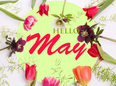 Pink spring flowers on white green background. Hello May wallpaper Foto de archivo