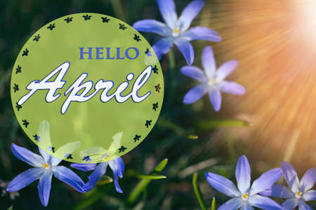 The first spring blue small flowers on a sunny day. Hello April wallpaper, greeting card