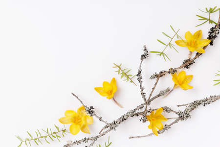Spring frame of small yellow flowers, floral arrangement