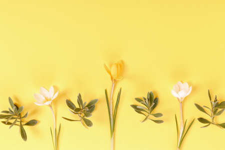 Festive Easter border, frame from easter eggs and spring flower crocus on yellow background. Stylish easter flat lay yellow