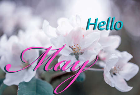 Cherry blossoms in full bloom. Hello May wallpaper, spring garden background