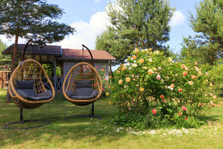 Two rattan cocoon wicker chairs near blooming roses in the backyard in summer