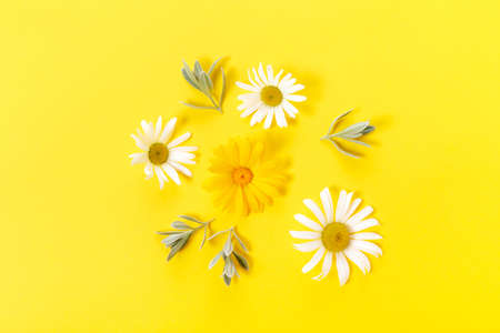White and yellow chamomile flowers on yellow background. Spring, summer concept. Flat lay, top view