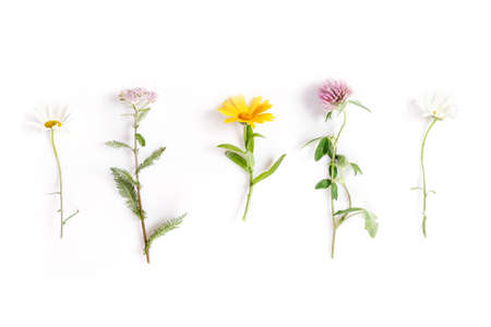 Chamomile, yarrow, calendula, clover medicinal herbs isolated on white background, flat lay