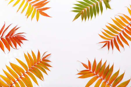 Autumn composition. Frame from autumn colorful leaves on a white background. Autumn, fall concept. Flat lay, top view, copy space