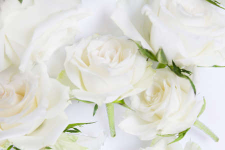 Beautiful flying white roses flowers in water background, creative floral layout, horizontal. 免版税图像