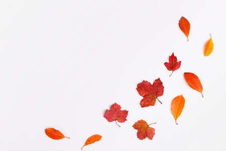 Autumn composition.Frame made of autumn dry multi-colored leaves on white background. Autumn, fall concept. Flat lay, top view, copy space
