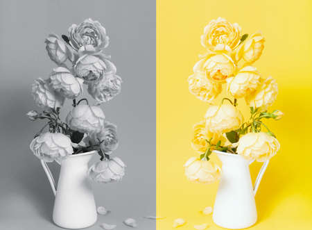 Colors of year 2021. Gray and Yellow. Beautiful yellow rose flower