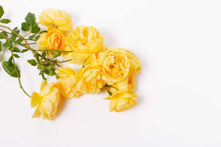 Festive flower composition on the white wooden background. Overhead view 免版税图像