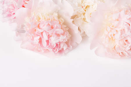 Festive flower pink peony composition on the white background. Overhead top view, flat lay. Copy space.
