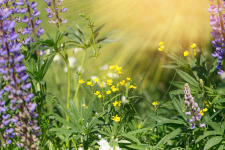 Beautiful meadow field with wild flowers. Health care concept. Rural field. Alternative medicine.