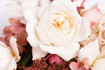 Roses, hydrangea. Flower composition on white background.