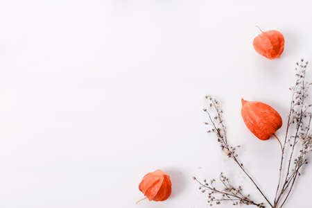Autumn composition made of orange physalis and dry autumn twigs on white background. Autumn, fall concept.