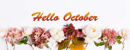 Hello October wallpaper, autumn background with burgundy pink rose and hydrangea 免版税图像