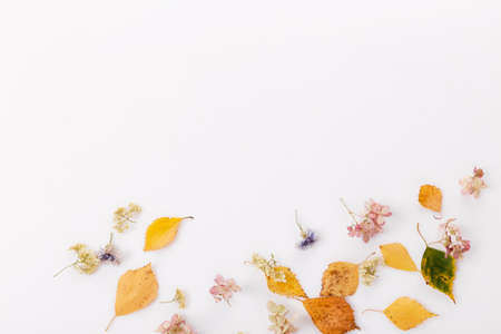 Autumn composition made of autumn dry multi-colored leaves on white wooden background. Autumn, fall concept. Flat lay, top view
