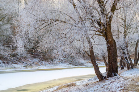 marge: Trees in hoarfrost on the banks of a small river in December Stock Photo
