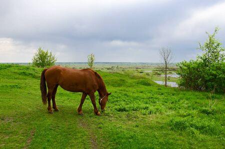 campesino: Bah�a caballo campesino se pasta en un prado verde