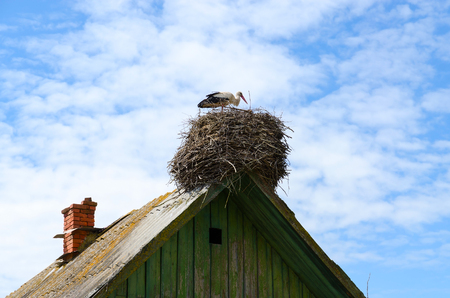 schist: Stork in nest on roof of old rural house on sky background