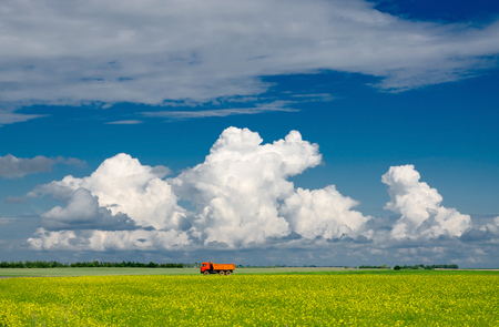 Blooming yellow rapeseed field against blue sky with clouds, Belarus