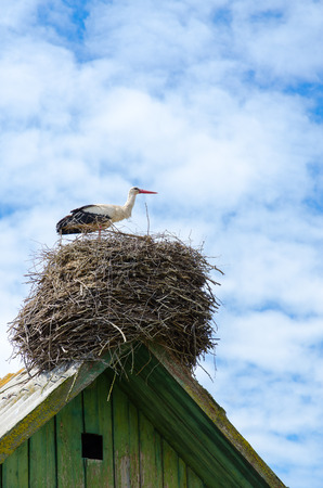 shiver: Stork in nest on roof of village house on background of blue sky