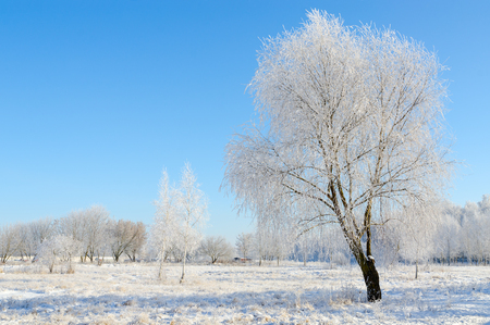 Beautiful winter landscape. Trees in hoarfrost on a clear sunny day Stock Photo